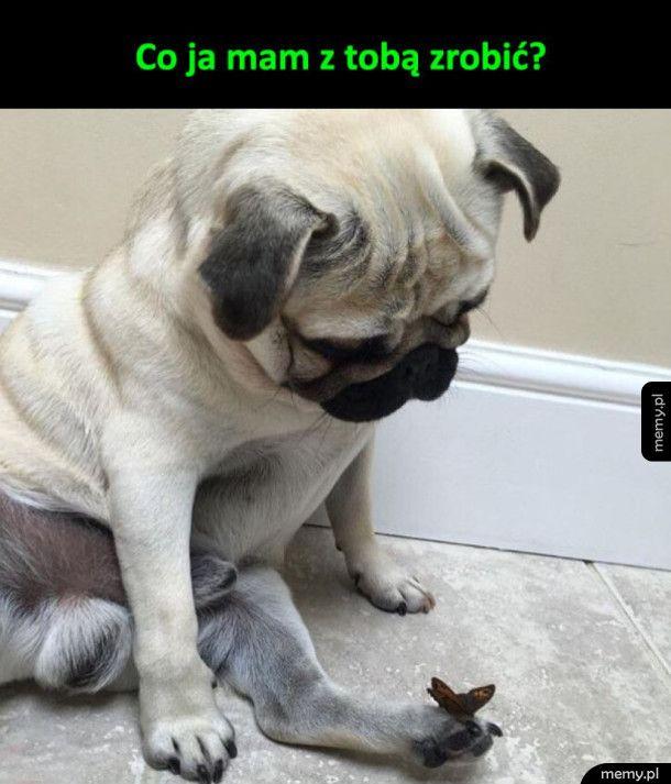Motylek i pies
