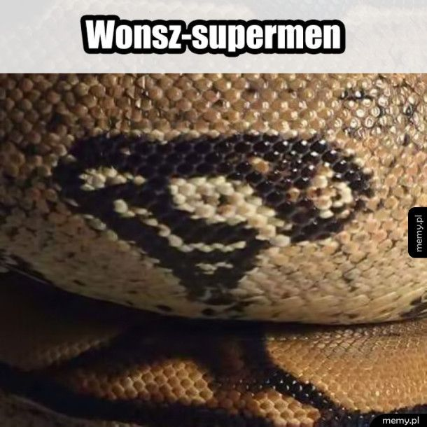 Wąż supermen