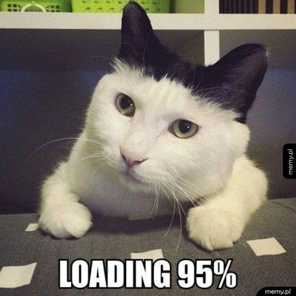 Kot się ładuje