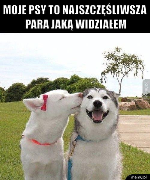 Moje psy to najszczęśliwsza para jaką widziałem