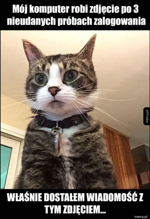 Koty nas obserwują...