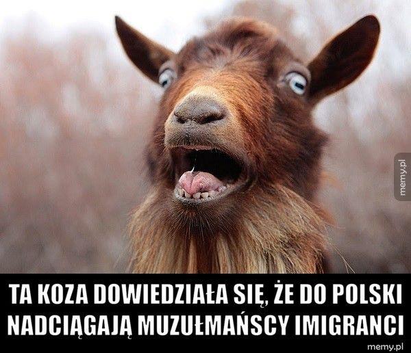 Ta koza dowiedziała się, że do Polski nadciągają muzułmańscy imi