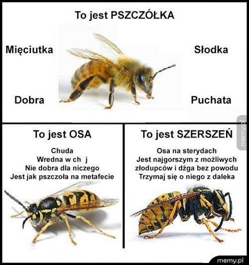 Pszczoła, osa, szerszeń - różnice