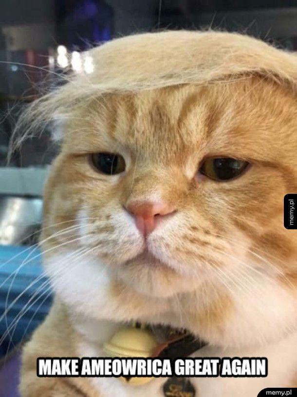 Kot Trump