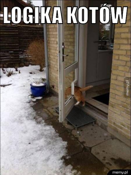 Koteł chadza swoimi ścieżkami