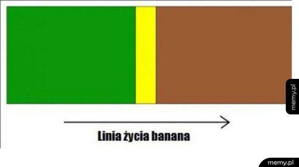 Linia życia banana