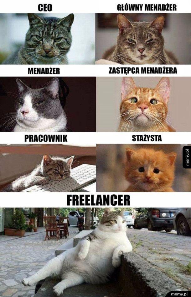 Koty biznesu