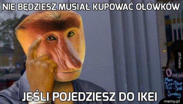 Złota myśl Janusza