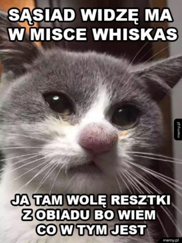 Kot Janusz