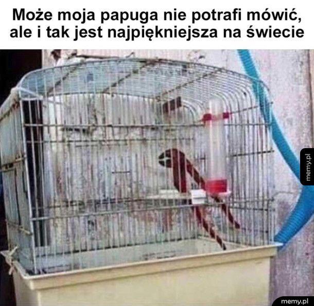 Mój ukochany ptaszek