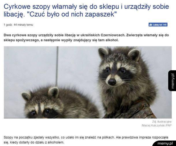 Ważny news