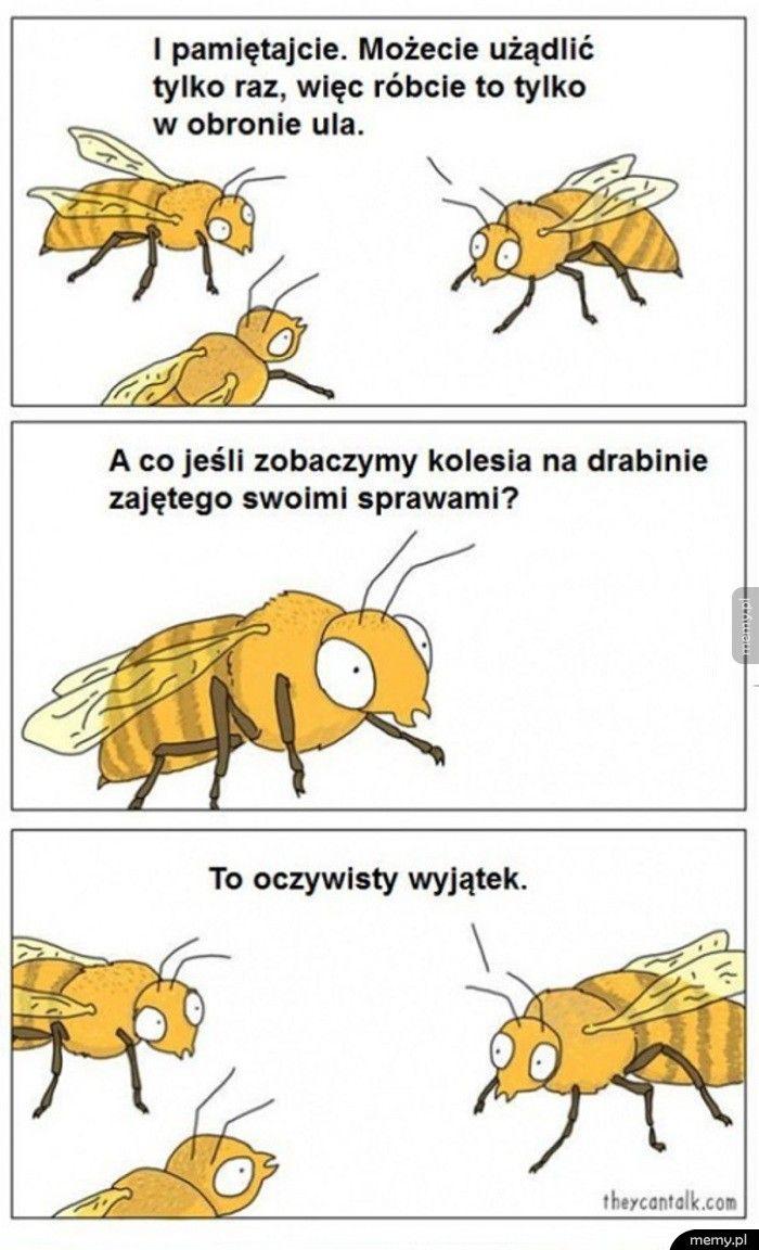 Logika pszczół