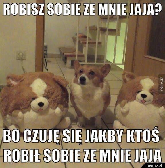 Heheszki?