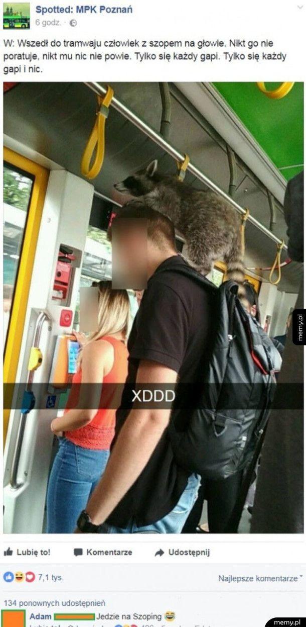 Człowiek z szopem na głowie