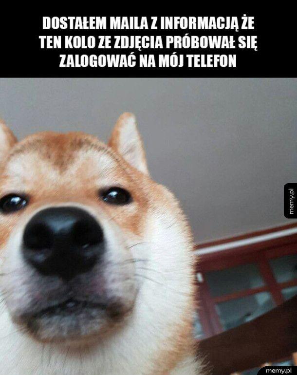 Zabłokowany telefon i pies