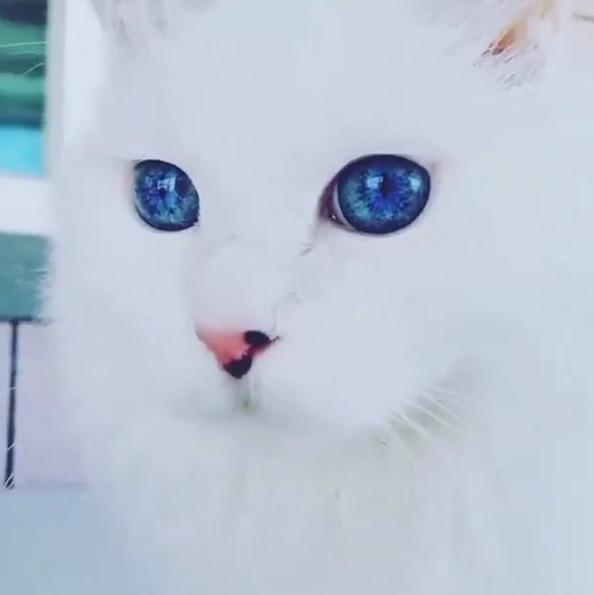 Kocie wcielenie Białych Wędrowców (GoT)
