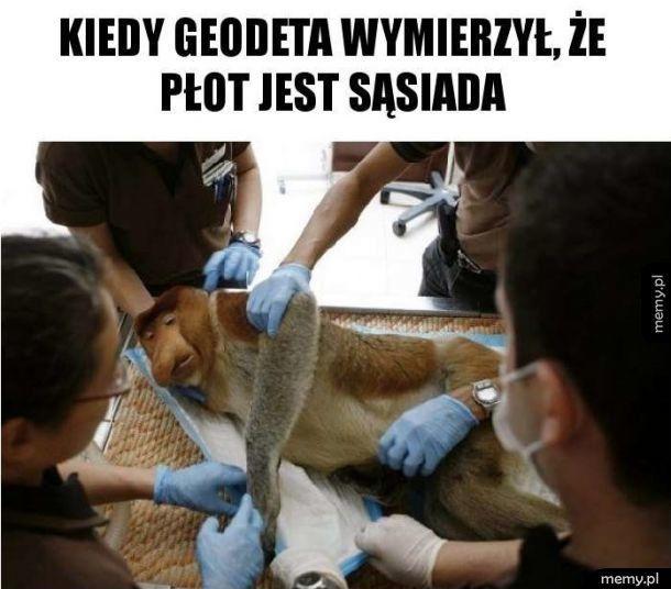 Januszowy geodeta