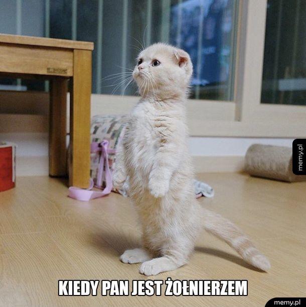 Zabawny kotek