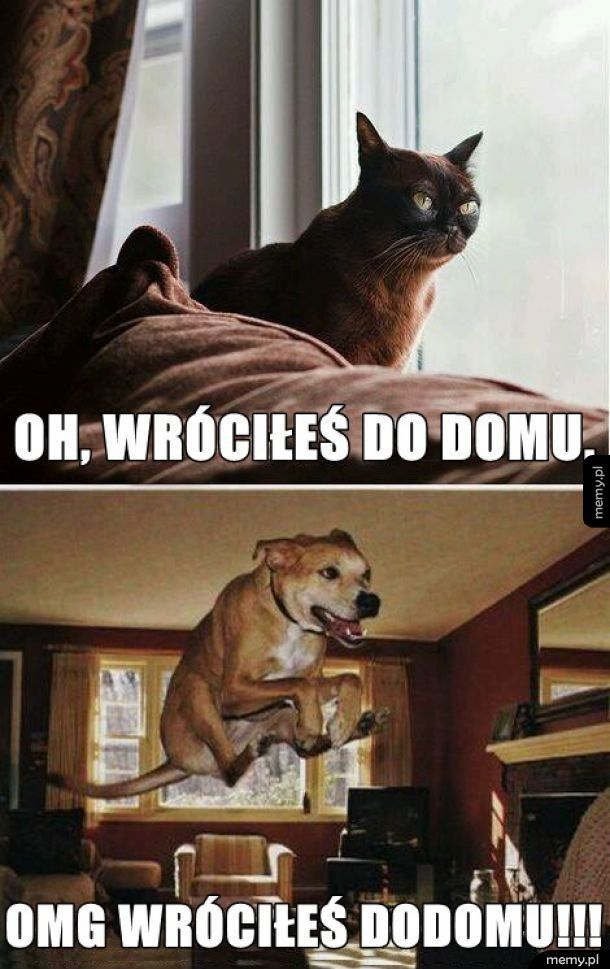 Kot vs. pies