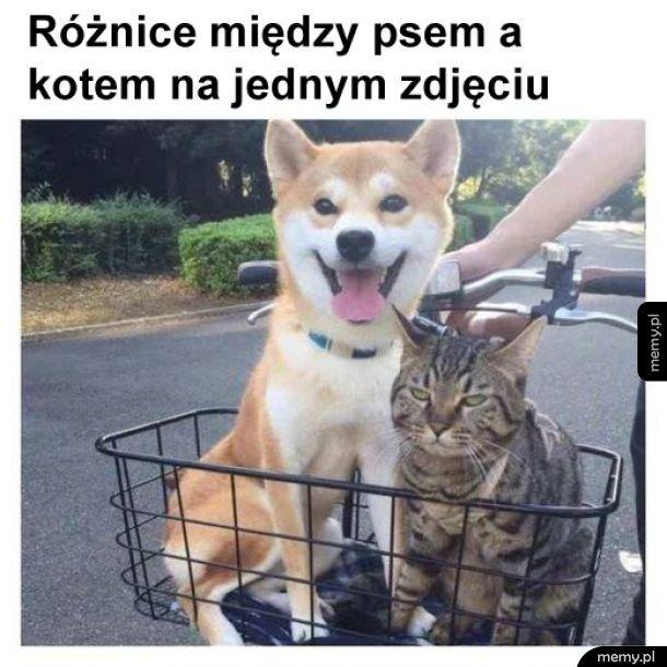Pieseł i koteł
