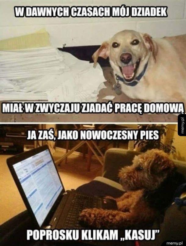 Nowoczesny pies