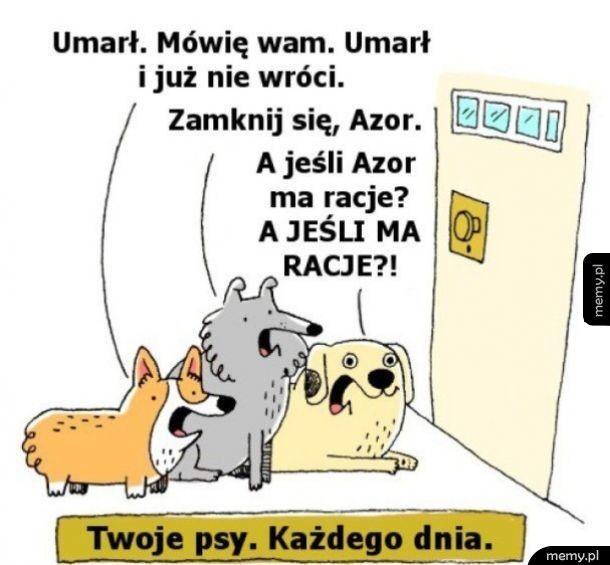 Psy każdego dnia