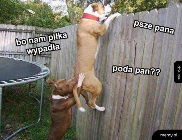 Psze pani