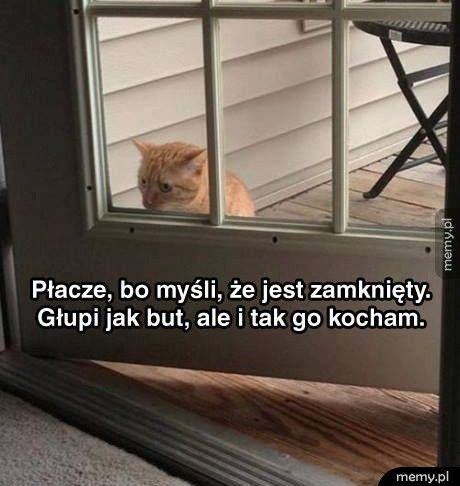Głupi kot