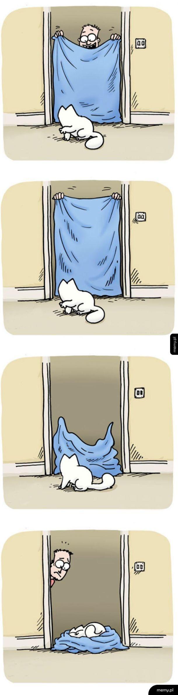 Koty w pigułce