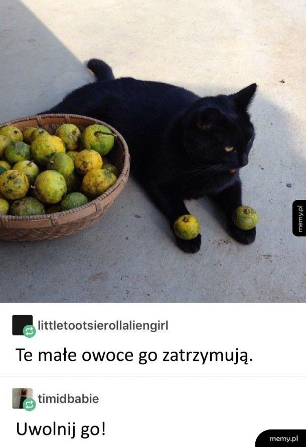Uwięziony koteł