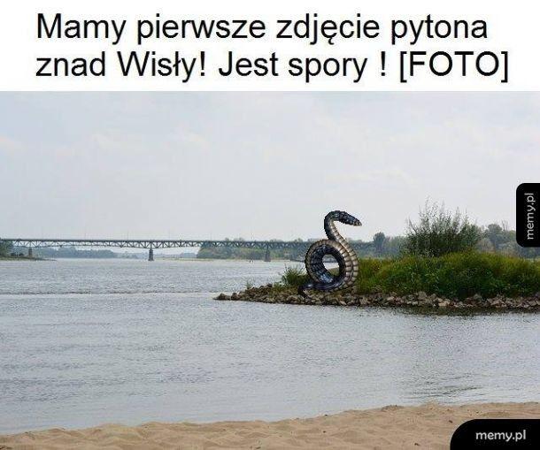 Pierwsze zdjęcie pytona nad Wisłą