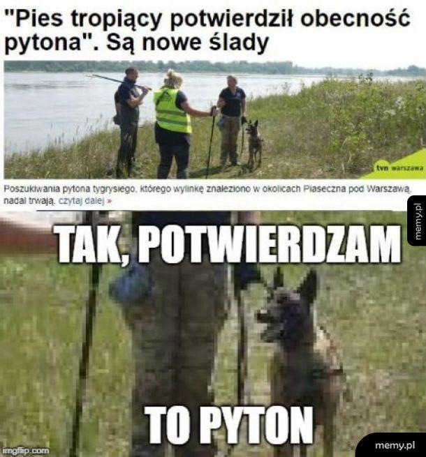 Znalazł pytona