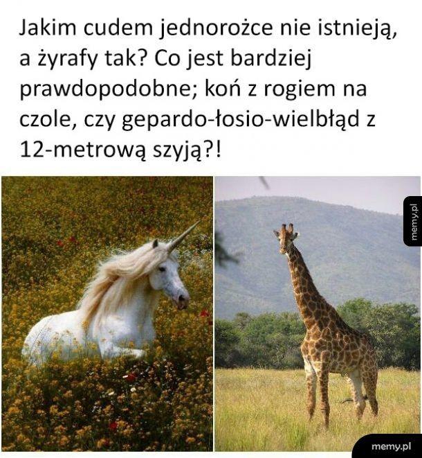 Jednorożec vs żyrafa