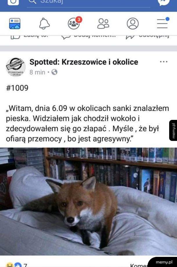Znaleziony dziwny pies