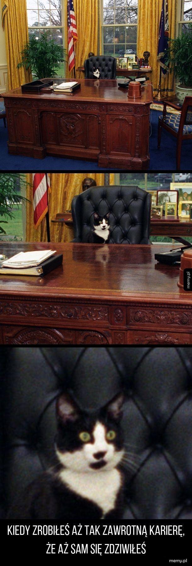Koteł na prezydenta!