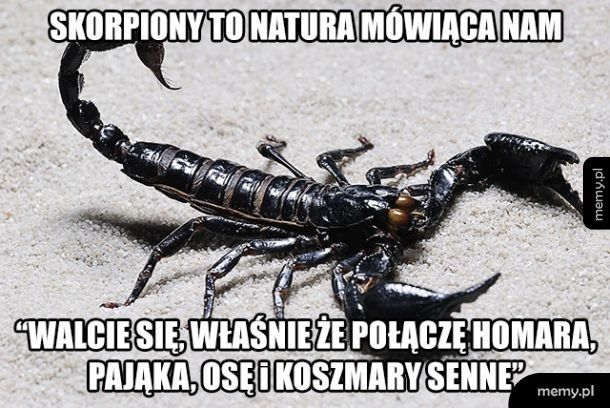 Oto jak powstały skorpiony