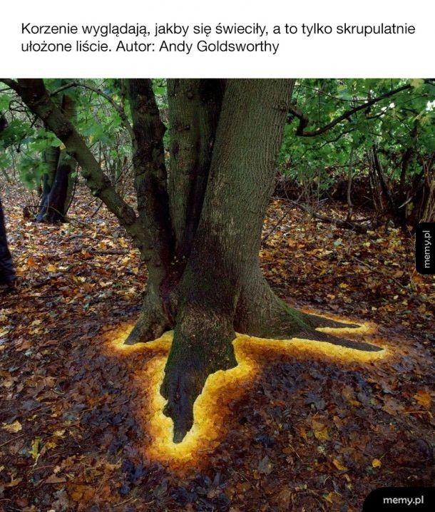 Świecące korzenie