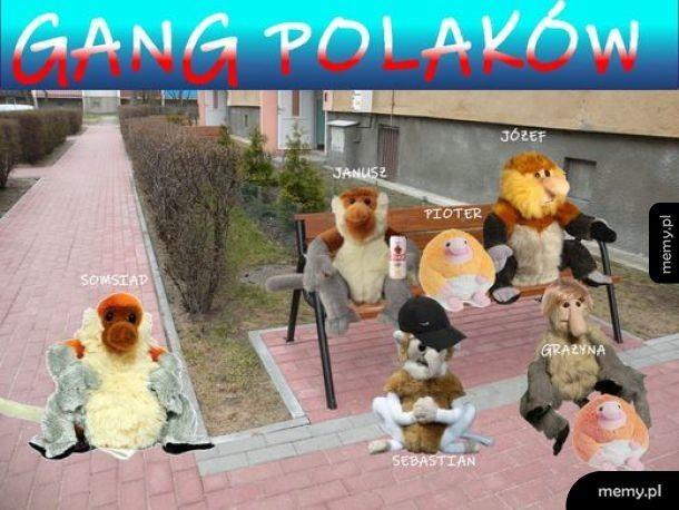 Gang Polaków
