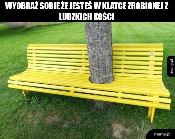 Kiedy lubisz drzewa