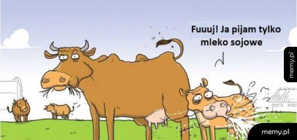 Krowie mleko