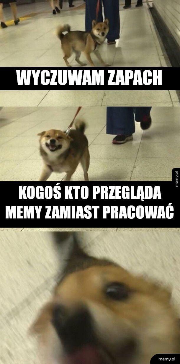 Nowy pies szefa