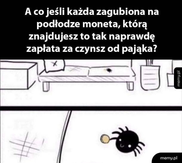 Kochany pająk