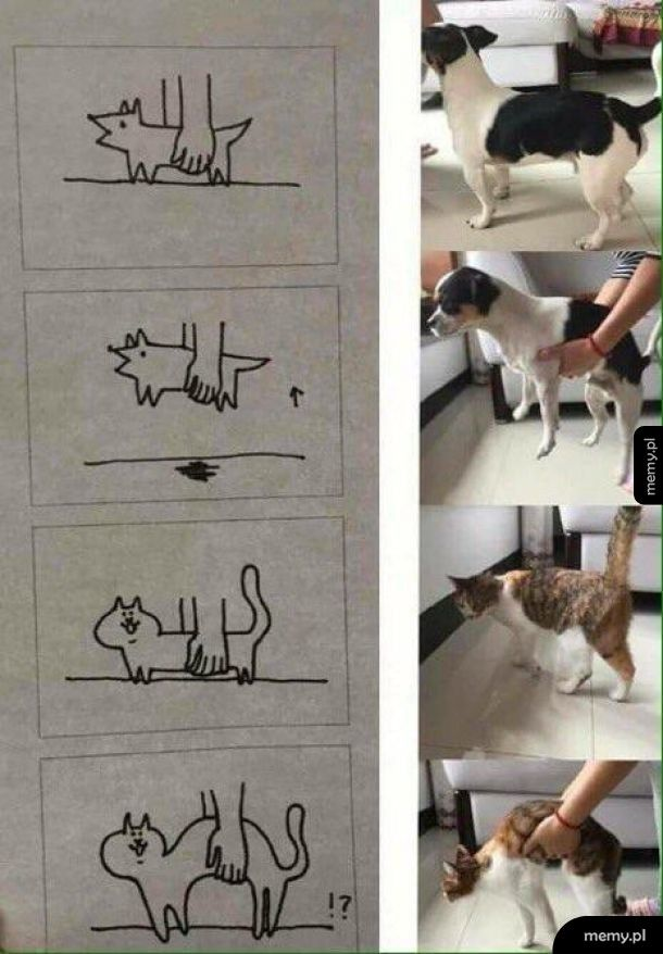Kot vs pies