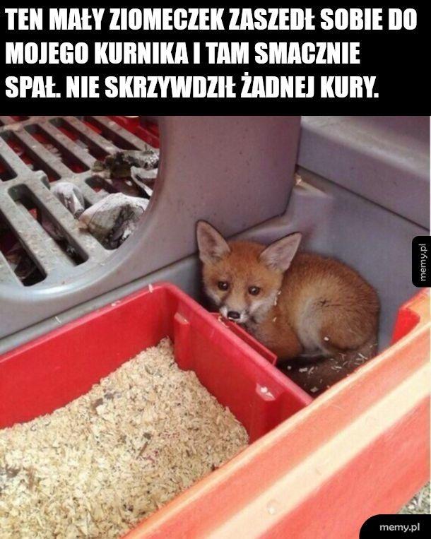 Lisełek