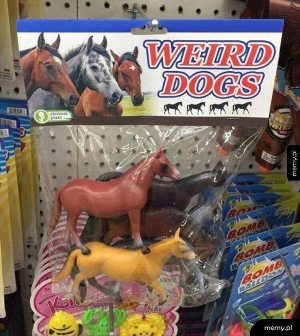 Dziwne psy