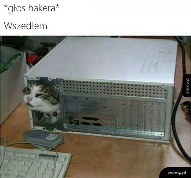 Hacker Cat