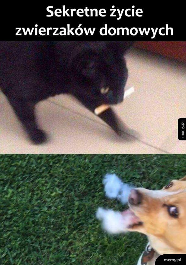 A co robi Twój zwierzak gdy nie patrzysz?