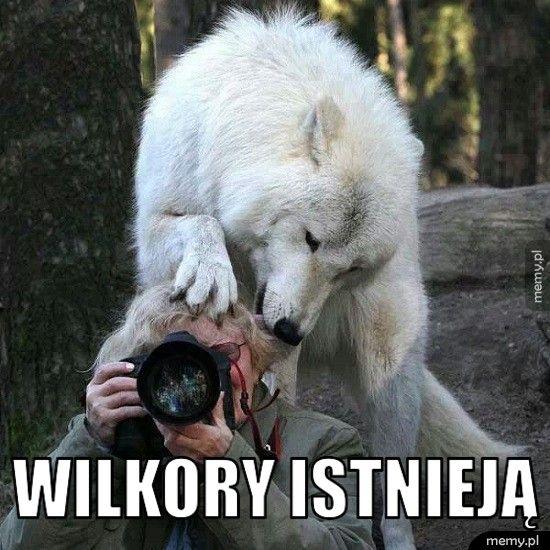 Wilkory