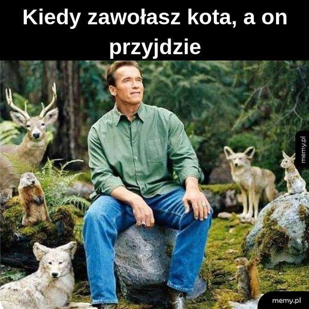 Król zwierząt