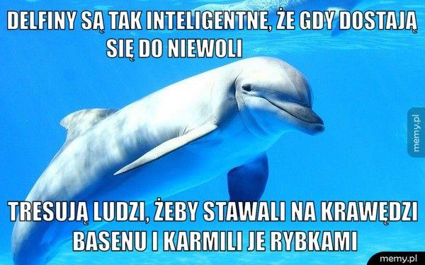 Delfiny są tak inteligentne, że gdy dostają się do niewoli       Tresują ludzi, żeby stawali na krawędzi basenu i karmili je rybk